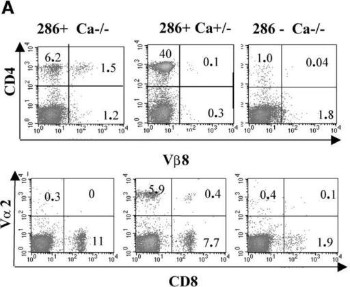 Evidence for expression of multiple TCRs in G286 mice. (A) Peripheral blood lymphocytes from G286 Cα−/− (left) G286 Cα+/− (middle) and NOD Cα−/− (right) mice were stained with antibodies for CD4 and Vβ8 (top) or CD8 and Vα2 (bottom). The percentage of cells in each quadrant are indicated in each corner of the plots. (B) Cells from lymph node of a G286 mouse or thymus of a G286 Cα+/− mouse were stained with antibodies for CD4, CD8, and CD3. Cells were gated on CD4+ or CD8+. Expression of CD3 versus I-Ag7-286 tetramer is shown. Cells in the diagonal gate represent cells for which the p286-specific TCR is the predominant TCR expressed. Percentage of cells in the gates drawn are indicated on the plots.
