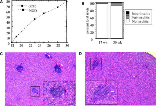Incidence of diabetes and insulitis in G286 mice. (A) Diabetes incidence in female G286 (circles, n = 6) or NOD littermates (squares, n = 9). (B) Insulitis in 17-wk-old (left) or 30-wk-old (right) female G286 mice. Islets were scored as either no insulitis, periinsulitis, or intrainsulitis. A total of 42 and 160 islets were scored in the 17-wk-old and 30-wk-old mice, respectively. Salivary gland tissue sections from 22-wk-old NOD (C) and 23-wk-old G286 (D) mice. Original magnification is 40× for the large picture, and the inset (location in large picture indicated by the black box) shows one focus of infiltrating lymphocytes at an original magnification of 200×.