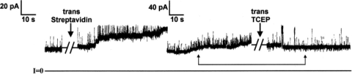 The nature of the streptavidin-induced noise. Before the start of the record, T domain biotinylated at residue 261 was added to the cis compartment to a concentration of ∼50 ng/ml. During the entire experiment, the voltage was held at +60 mV, except for occasional pulses to 0 mV during the breaks. Conductance increased linearly for several minutes. Before the first arrow, it was 467 pS, corresponding to ∼12 channels. At the first arrow (during a 25-s break), streptavidin was added to the trans compartment to a concentration of 30 μg/ml. Immediately after streptavidin addition, the amount of noise increased significantly, and the conductance increased slowly to ∼1.4 nS, corresponding to 35 channels. Note that the noise represents fluctuations to higher, not lower, conductances. During the second break, lasting 4.5 min, conductance continued to rise slowly, to a level of 1.5 nS, corresponding to ∼37 channels. TCEP, pH 7.1, was then added to the trans compartment to a concentration of 20 mM. Subsequently, the conductance fell to the level seen after the break, and the noise decreased drastically. The connected arrows show points in the record of equal conductance (∼32 channels) before and after TCEP addition; note the difference in noise at these points. The solutions on both sides of the membrane contained 1 M KCl, 2 mM CaCl2, 1 mM EDTA; the cis solution contained 5 mM Mes, pH 5.3, and the trans contained 5 mM HEPES, pH 7.2. The records were filtered at 100 Hz by the chart recorder.