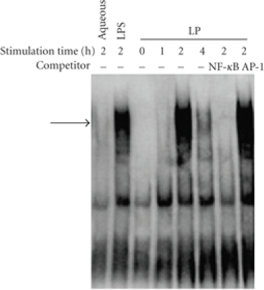 The activity of NF-κB in different groups wasexamined by EMSA. NF-κB activation was measuredby EMSA using a biotin-labeled oligonucleotide encompassing the NF-κB consensusmotif. THP-1 cells were stimulated with M.genitalium LP (3 μg/mL) at different timeintervals (0, 1, 2, and 4 hour(s)). THP-1 cells treated with 100 μL aqueous phase and 0.1 μg/mL LPSwere used as control. The specificity of DNA binding was assessed bypreincubating extracts with unlabeled specific (NF-κB) or unspecific (AP-1)competitor oligonucleotide. The arrow indicates specific NF-κB band.