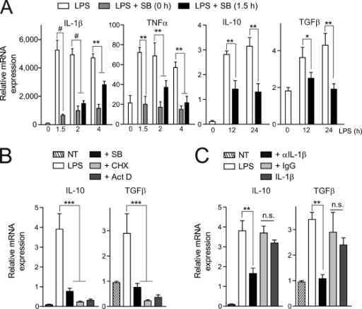 Early p38-induced IL-1β stimulates the later expression of the antiinflammatory cytokines IL-10 and TGFβ in cultured macrophages. (A) Primary macrophages were cultured in vitro and stimulated with LPS. At the time of stimulation, or after 1.5 h, cells were treated or not treated with SB203580 (SB) for the indicated times. Comparative qPCR analysis. NT, nontreated cells. (B) Primary macrophages were treated with LPS ± SB203580, cycloheximide (CHX), or actinomycin D (Act D). (C) As in B, cells were treated with an IL-1β neutralizing antibody, control IgG antibody, or recombinant IL-1β for 24 h (in this case, in the absence of LPS). Means ± SEM of at least three experiments. *** or #, P < 0.001; **, P < 0.01; *, P < 0.05.