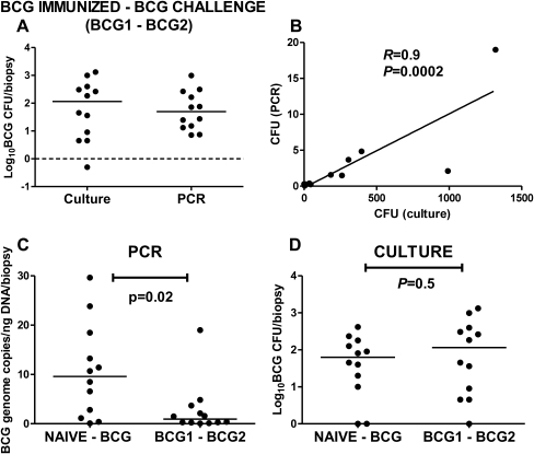 Variability in postchallenge colony-forming unit (CFU) counts in bacille Calmette-Guérin (BCG)–vaccinated humans. A, Comparison between culture and polymerase chain reaction (PCR) challenge results in BCG-vaccinated volunteers, log scale. B, Correlation between culture (CFU count) and PCR (Spearman rank). Comparison of PCR and culture challenge results in naive (NAIVE–BCG) and BCG-vaccinated (BCG1–BCG2) volunteers. C, PCR values (BCG copies [log10] per biopsy specimen, corrected for nanograms of DNA extracted) in BCG-naive and BCG-vaccinated groups. D, Corresponding culture values (log10 BCG CFU count per biopsy specimen). Exact P values are shown.