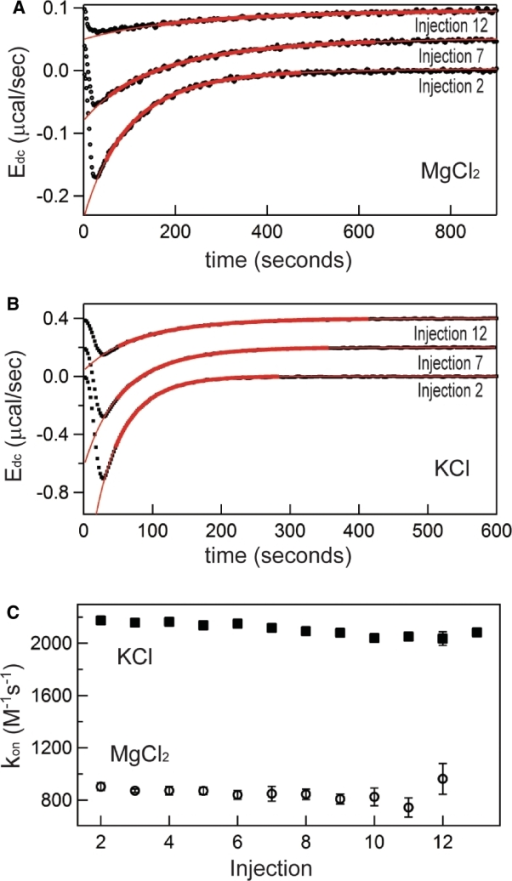Representative kinetics (kon) measurements from titrations in either 0.5 mM MgCl2 or 150 mM KCl at 20°C (titrations are the same as those in Figures 2 and 3). (A) Selected deconvolved energies (Edc) and fits for peaks 2, 7 and 12 for titration performed in 0.5 mM MgCl2, 20°C. Bold red lines represent target function description of the data using best-fit parameters over the time range used in fitting; extrapolations of these functions are displayed in thin red lines. Peaks 7 and 12 are arbitrarily offset from 0 to aid visualization. (B) Representative peaks and fit functions for titration in 150 mM KCl, 20°C. (C) Corresponding complete population of kon values from sampled titrations. Solid squares, KCl data; Open circles, MgCl2 data.