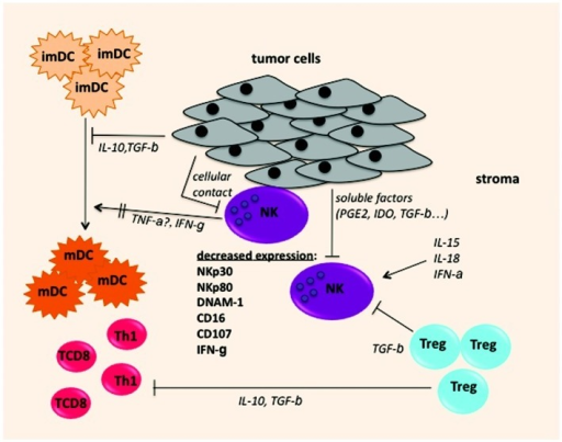 Figure 1. Possible mechanisms leading to intratumoral NK cell alterations: NK cells infiltrating lung carcinoma display altered expression of NKp30, NKp80, DNAM-1 and CD16 and impaired capacities of CD107 expression and IFNγ secretion. Tumor cells produce soluble molecules such as IDO, PGE2, TGBβ and/or express membrane molecules (NK ligands) that can downregulate or shed receptors at the surface of NK cells. NK cells can also be inhibited by TGFβ produced by regulatory T cells, that are present in the NSCLC tumor microenvironment. In addition, intratumoral NK display impaired IFNγ secretion that can cause inefficient DC maturation.