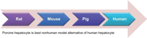 The pig liver is closer to human liver anatomy than rat | Open-i