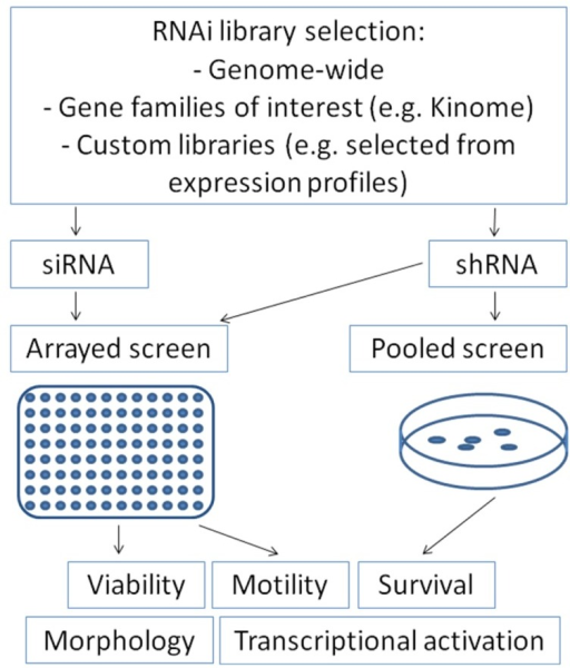 Overview on the use of RNAi libraries in different screening approaches for tumor-relevant read-outs.