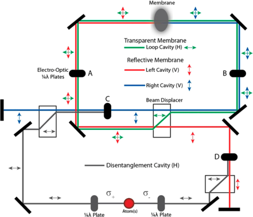 Suggested schematic experimental configuration for effective flipping of the MITM optical cavity fields and the disentanglement operation.The three cavities necessary for both the preparation and disentanglement of the cat state are colour coded. The original MITM setup where the membrane separates two Fabry-Pérot cavities is colour coded via blue and red optical paths with vertically polarized photons (shown by vertical double arrows). The Electro Optic Quater Wave Plates [EOP] (A, B) are used to rapidly switch the polarisation of the light fields to horizontal polarization. Due to the presence of polarization dependent beam displacers, horizontally polarized light propagates in a ring resonator (green optical path), and this evolution is left on for the brief duration required to flip the optical fields on either side of the membrane. Then the EOPs (A, B) are switched back to return to the original Fabry-Pérot MITM setup. When finally one wishes to disentangle the membrane and optical fields EOPs (C, D) are used to route the photons into another ring resonator that also includes an atomic ensemble.