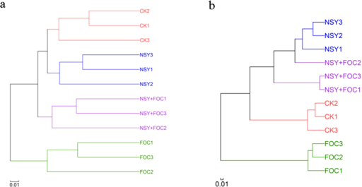 Hierarchical cluster tree constructed based on a distance matrix calculated using the unweighted UniFrac algorithm for the soil samples collected from the four treatment conditions (CK, untreated plants (control); NSY50, plants challenged with NSY50 (2.5 × 108 CFU/mL); FOC, plants challenged with FOC (1 × 108 CFU/mL); NSY50 + FOC: plants challenged with NSY50 for 3 days and then with FOC) 30 days after FOC inoculation.(a) bacteria; (b) fungi. Note: the different numbers (1, 2, 3) after the letters for all treatments indicate the three replicates. The letters NSY in the graph replace NSY50 to avoid confusion.