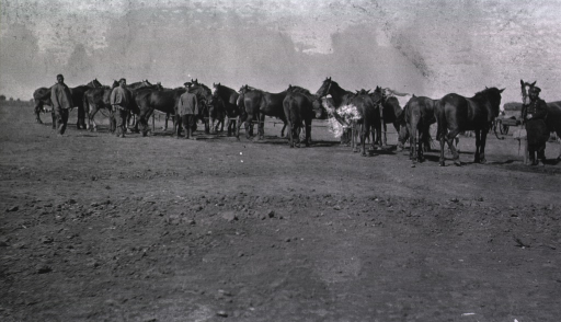 <p>Personnel attending to the horses at a Division Lazaret.</p>