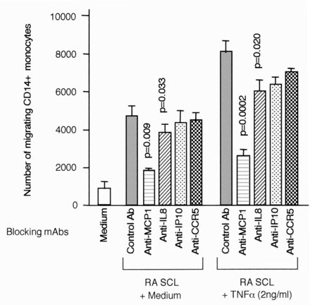 Blocking of monocyte migration induced by supernatant of RA SCL stimulated with TNF-α. Monocyte migration induced by supernatants of RA SCLs (RA6/1 and RA8/3) stimulated with 2 ng/ml TNF-α was assessed using mAbs, which can neutralize specific chemokines or chemokine receptors. Concentrations of mAbs were 10 μg/ml for MCP-1, IL-8, and IP-10, and 50 μg for anti-CCR5 mAb with 5 × 105 SRBC rosette negative cells. Migrating cells were stained with anti-CD-14 mAb, and migrating CD14+cells were counted by flow cytometry. The mean and SEM were calculated from the results of three independent experiments. The paired Student t test was used to assess statistical differences versus the result with control mAb.