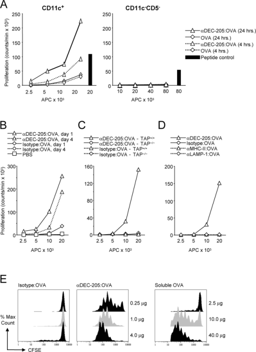 Targeting of αDEC-205:OVA to lymph node CD11c+ DCs in vivo. (A) Only CD11c+ lymph node DCs efficiently present exogenous αDEC-205:OVA, and to a lesser extent OVA, to OT-I T cells. C57BL/6 mice were injected with 4.0 μg (1.0 μg/footpad) of αDEC-205:OVA conjugate or 400 μg (100 μg/footpad) of soluble OVA subcutaneously 4 and 24 h before sacrifice. The CD11c+ and CD11c−CD5− (B cell) fractions were MACS® sorted from lymph nodes and evaluated for presentation to OT-I T cells as in Fig. 2 A. Peptide controls were performed with the highest titration of APCs (DCs, left; B cells, right) for each group. (B) As in panel A but CD11c+ DC's were studied 1 and 4 d after injection of 4.0 μg (1.0 μg/footpad) of antibody:OVA conjugates subcutaneously. (C) Presentation by DCs of OVA peptides from C57BL/6 but not TAP−/− mice given 4.0 μg (1.0 μg/footpad) of IgG:OVA conjugates subcutaneously 4 d earlier. (D) αDEC-205:OVA elicits better presentation of OVA derived peptides than other DC-targeted conjugates, each injected with 4.0 μg (1.0 μg/footpad) of IgG:OVA conjugates subcutaneously 4 d earlier. (E) αDEC-205:OVA induces stronger in vivo proliferation of OT-I T cells than OVA alone. C57BL/6 mice were injected intravenously with 2 × 106 CFSE-labeled OT-I T cells and then graded doses of IgG:OVA conjugates or OVA subcutaneously 24 h later. 3 d after conjugate injection, lymph nodes were harvested and the expansion of CD8+Vα2Vβ5.1/5.2 cells evaluated by flow cytometry for CFSE dilution. Each panel represents two or more experiments.