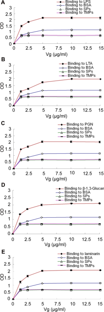 Binding of Vg to various ligands.LPS, LTA, PGN, laminarin and β-1,3-glucan dissolved in re-distilled water were applied to a 96-well microplate, and air-dried overnight at room temperature, followed by ELISA. BSA, serum proteins (SPs) and total muscle proteins (TMPs) of H. otakii at the same concentrations were treated similarly as controls. Data were expressed as mean values±SEM (n = 3). The bars represent the standard error of mean values. Although Vg slightly binds to BSA and SPs and TMPs of H. otakii, its affinity to the immobilized ligands is significantly higher (p<0.05). (A–E) Binding of Vg to LPS, LTA, PGN, β-1,3-glucan and laminarin.