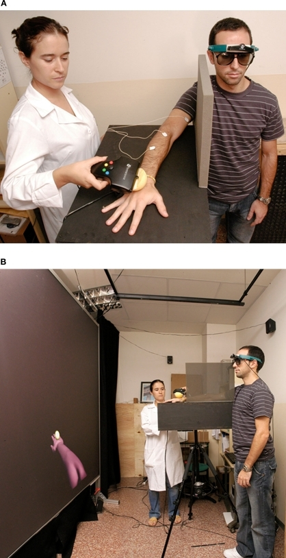 The experimental setup. (A) The participant wears passive stereo glasses and a head-tracker, and the virtual image is determined as a function of his head direction. The experimenter taps and strokes the participant's real hand with a 6-degree freedom Wand, whose position is tracked and used to determine the position of the virtual sphere. (B) The participant is standing in front of a 2 m × 2.7 m rear projection screen. The arm in the screen is seen from the participant's point of view as projecting out of his right shoulder, while his own arm is out of view and resting on a support. In the projection the participant also sees a sphere striking in synchrony and in the same place on the virtual hand as the touch stimuli delivered to his own hand.