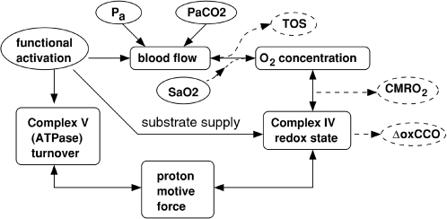 Summary of the main inputs, variables and processes in the model.Model inputs are enclosed in solid ovals, while outputs are enclosed indashed ovals. Pa is arterial blood pressure,SaO2 is arterial oxygen saturation level, PaCO2 is arterialCO2 level. TOS and ΔoxCCO are NIRS signals defined inthe text.