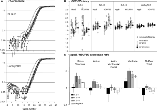Effect of the baseline estimation method on qPCR data analysis. (A) PCR amplification curves of NppB and NDUFB3 in samples of five different parts of the developing chicken heart. Baseline fluorescence was estimated by the system software as a linear trend through the observations of cycles 3 through 10 (BL 3–10, top panel) or with the baseline estimation method described in this article (LinRegPCR, bottom panel). See Supplementary Figure S2A for additional system baseline settings.(B) PCR efficiency values of NppB and NDUFB3 from each individual sample (open circles) in three independent PCR runs. An optimal W-o-L was applied per amplicon per plate. Mean efficiencies per plate and per amplicon were calculated. PCR efficiencies were determined after application of three baseline trends, as well as after the LinRegPCR baseline subtraction. The variation was lowest in LinRegPCR-derived PCR efficiency values (see Supplementary Figure S2B). (C) NppB/NDUFB3 gene expression ratio in different parts of the developing chicken heart for each of the baseline correction methods. Note that the pattern of observed expression ratios depends on the applied baseline correction method. Variation in expression ratios per tissue is lowest in data derived from LinRegPCR-corrected data.
