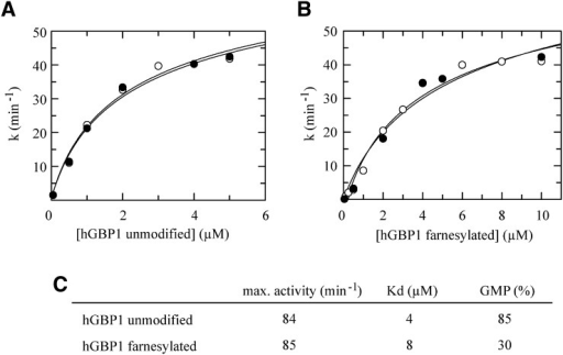 Concentration-dependent GTPase activity of hGBP1. Different concentrations of (A) unmodified and (B) farnesylated hGBP1 were incubated with 1 mM GTP at 37°C in the presence (closed circles) or in the absence (open circles) of liposomes. The specific activities obtained from linear fits were plotted against the protein concentration. Maximal activity and dissociation equilibrium constant of the hGBP1 dimer were calculated by quadratic fits. C: Comparison of maximal activity, dimer dissociation equilibrium constant (Kd), and produced GMP for unmodified and farnesylated hGBP1.