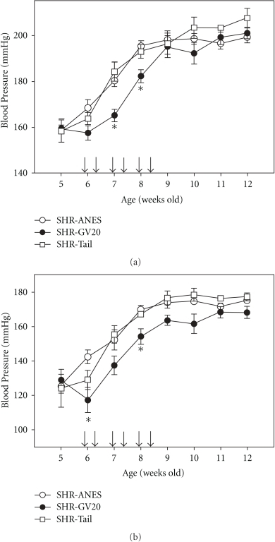 (a) SBP in SHR that were anesthetized for the same period of EA stimulation (SHR+ANES), in Governor Vessel 20 (GV20) treated rats (SHR-GV20), or in non-acupoint treated rats (SHR-Tail) from 5 to 12 weeks. (b) Diastolic blood pressure in SHR (SHR+ANES), GV20 (SHR-GV20) or tail acupuncture groups (SHR-Tail) from 5 to 12 weeks. Results are mean ± SEM for six rats in each group. *P < .05, compared with SHR+ANES. The arrows show the EA treatment for 3 weeks (6–8 weeks).