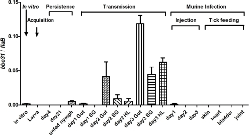 bbe31 expression profile throughout representative stages of the natural spirochete life cycle.bbe31 is preferentially expressed in fed tick. It is induced from the 2nd day, expressed in all the tested tissues including gut, hemolymph and salivary glands, and showed the highest expression level in the fed gut. Both mean and SD were calculated from 2 independent experiments, with 3 mRNA samples each experiment. In vitro, B.burgdorferi N40 grown in BSK medium with a concentration of 1×107/ml; Larva, I.scapularis larva fed on N40-infected mouse till engorged; day4, larva 4-day after feeding; day 21; larva 21-day after feeding; day1 Gut, day2 Gut and day3 Gut, guts of N40-nymphs feeding on C3H mice for 24, 48 and 72 hours; SG, salivary glands; HL, hemolymph; Injection, mouse inoculated with 1*106 B.burgdorferi N40; day1, day2 and day3, mouse localized skin 24, 48 or 72 hours after B.burgdorferi N40 infection through needle inoculation; skin, heart, bladder and joint, mouse tissues collected 21 days after N40-infected nymphs feeding on C3H mice.