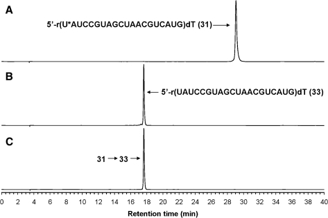 RP-HPLC analysis of purified and desalted 5′-r(U*AUCCGUAGCUAACGUCAUG)dT (31) [U* and dT represent 2′-O-(pyren-1-ylmethanimine-N-oxymethyl)uridine and 2′-deoxythymidine residues, respectively] and its conversion to 5′-r(UAUCCGUAGCUAACGUCAUG)dT (33). (A) Chromatogram of 31 that was prepared from the 2′-O-pyrenylated ribonucleoside phosphoramidite 8a and commercial 2′-O-(tert-butyldimethylsilyl) APac, GPac, CAc and U phosphoramidite monomers, deprotected, RP-HPLC purified and desalted as delineated in the 'Materials and Methods' section. (B) Chromatogram of 33 that was prepared from commercial 2′-O-(tert-butyldimethylsilyl) APac, GPac, CAc and U phosphoramidite monomers, and processed as described in (A). (C) Chromatogram of RP-HPLC purified and desalted 31 that was treated with 0.5 M TBAF in DMSO for 2 h at 55°C and then desalted. RP-HPLC analysis was performed using UV detection (254 nm) and a 5 μm Supelcosil LC-18S column (25 cm × 4.6 mm) according to the following conditions: starting from 0.1 M triethylammonium acetate pH 7.0, a linear gradient of 1% MeCN/min was pumped at a flow rate of 1 ml/min for 40 min and was then held, isocratically, for 20 min. Peak heights are normalized to the highest peak, which is set to 1 AU.
