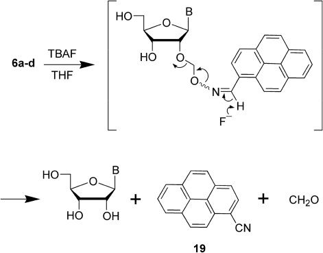 Fluoride-assisted conversion of 2′-O-pyrenylated ribonucleosides (6a–d) to native ribonucleosides. TBAF, tetra-n-butylammonium fluoride; B, uracil-1-yl, cytosin-1-yl, adenin-9-yl, or guanin-9-yl.