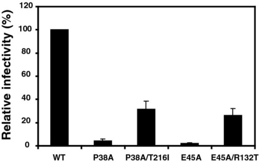 Rescue of P38A and E45A infectivity defects mutations by second-site mutations T216I and R132T. Single-cycle infectivity was assayed in HeLa-P4 target cells. Infectivity was determined as the number of infected cells per ng of p24 in the inoculum, and values are expressed as percentage of wild-type HIV-1 infectivity. Results shown are the mean values of three independent experiments, with error bars representing one standard deviation.