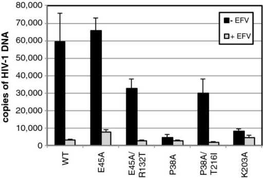 Quantitative analysis of reverse transcription of CA mutants in target cells. HeLa-P4 cells were inoculated with the indicated HIV-1 mutants, and the second-strand transfer viral DNA products accumulated at 8 hours were quantified by PCR. In half of the samples, the reverse transcriptase inhibitor Efavirenz (EFV) was included as a control for plasmid DNA contamination carryover from the transfections used to produce the virus stocks. Error bars represent the standard deviations of triplicate infections, and the results are representative of three independent experiments.