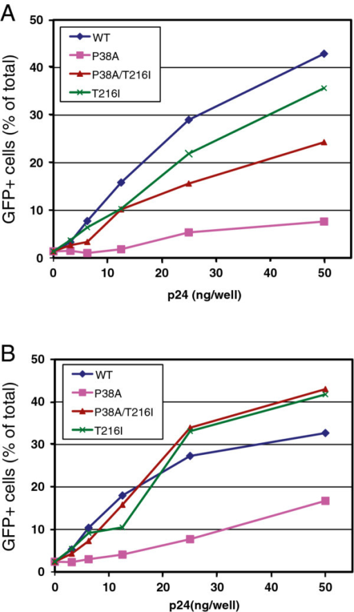 The second-site mutation T216I restores the ability of P38A particles to saturate TRIM5 restrictions in simian cells. Cultures of OMK (A) and FRhK-4 (B) cells were inoculated with the indicated quantities of VSV-G-pseudotyped CA mutant HIV-1 particles and a fixed subsaturating quantity of GFP-encoding pseudotyped HIV-1 particles. Results shown are representative of two independent experiments.
