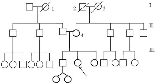 Pedigree of the patient: I, 1: deceased woman, 70 y.o., cardiac pathology I, 2: deceased man, 70 y.o., Parkinson's disease I, 3: deceased woman, 70 y.o., Type II diabetes II, 4: multinodular goitre.