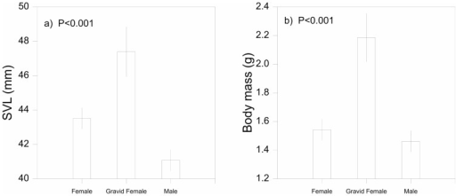 Sexual differences in body size.Regression analysis showing mean values and 95% confidence intervals for: a) snout-vent length (SVL mm), and b) body mass (g) between male, gravid female and non-gravid female Morethia boulengeri in southern New South Wales.