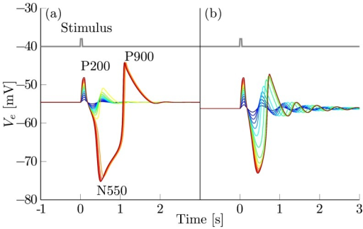 Response of the noise-free cortex to artificial stimuli.Excitatory bursts of 50 ms duration were applied to both populations. The spike rate of the stimuli  varies uniformly from 5 Hz (dark blue) to 100 Hz (dark red). The stimulus is shown in grey. (a) Bifurcation parameters are set to the mark N2 close to region III (see Table 2). There, a canard explosion leads to large amplitude responses that qualitatively resemble a typical evoked KC with its P200, N550 and P900 components. (b) Parameters are set to mark N3, so that the cortex is beyond the cusp close to region II (see Table 3). The canard vanished, leading to an even increase in the amplitude of the response.