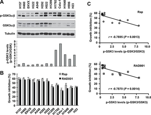 Basal levels of p-GSK3 in human lung cancer cell lines (A) are inversely correlated with cell sensitivity to rapalogs (B and C)Whole-cell lysates were prepared from the listed cell lines with comparable cell densities and subjected to Western blotting for detection of the indicated proteins (A). The intensities of these proteins were quantified with NIH Image J software. The growth-inhibitory effects of rapamycin or RAD001 at 10 nM were determined with the SRB assay after 3 days. The correlation between p-GSK3/GSK3 and growth inhibition was calculated with GraphPad InStat software (B and C).