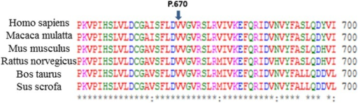 Protein alignment showing conservation of residues GJB2 V670 across six species.An alignment of the SLC26A4 amino acid sequence of six species suggested the evolutionary conservation of c.2009T>C (p.V670A).
