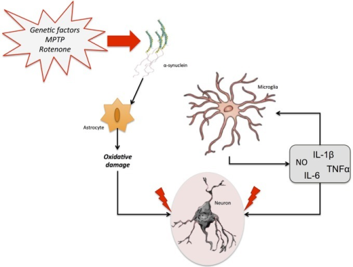 Neuroinflammation in Parkinson's disease (PD). Different genetic and/or environmental factors such as parkin mutations or MTPT exposure lead to the accumulation of α-synuclein aggregates in the brain. This accumulation triggers the activation of glial cells. The proinflammatory cytokines freed by astrocytes and microglia stimulate the release of several neuroinflammatory markers, including NO, IL-6, IL-1β, and TNF-α, which can promote neuronal death and aggravate the neurodegenerative process.