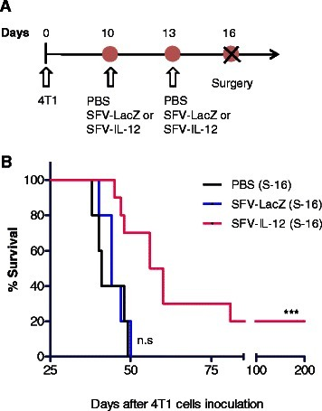 Neoadjuvant effect of SFV-IL-12. a Schematic representation of the therapeutic protocol performed in this study. Two doses of SFV-LacZ, SFV-IL-12 or PBS were i.t. injected as in Fig. 2. Three days later (i.e. day 16 after 4T1 cells inoculation), treated tumors were surgically removed (S-16). b Kaplan–Meier plot shows the survival rate of treated and control mice (n = 5-10). Non-significant (n.s), p< 0.001 (***)