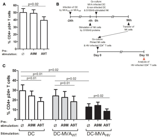 S100A9-tetramer stimulation and MVAHIV-priming significantly enhance by ability of NK cells to control HIV infection. S100A9-stimulated NK cells were tested in their ability to control HIV infection in autologous CD4+ T cells. (A) NK cells were stimulated or not by S100A9 tetramers or monomers at 1 μg/ml during 4 h and cultured with HIV-infected CD4+ T cells, and after 10 days of culture, the percentage of intracellular HIV-1 p24+ CD4+ T cells was analyzed by flow cytometry; graph shows cumulative results from six independent experiments. (B) Schema depicts the protocol used in (C), in brief: DCs were infected or not by MVAWT or MVAHIV, and 24 h later non-infected DCs and S100A9-stimulated NK cells were added to the culture; and 96 h later (4 days) NK cells were transferred to a culture of HIV-infected CD4+ T cells and the ability of NK cells to control HIV infection was assessed at 10 days post-HIV infection. (C) Graph shows the percentage of HIV p24+ CD4+ T cells in culture; cumulative results from eight independent experiments are expressed as mean ± SE and p values are shown. A9M, S100A9 monomer; A9T, S100A9 tetramer; DC-MVAWT, MVAWT-infected DC; DC-MVAHIV, MVAHIV-infected DC.