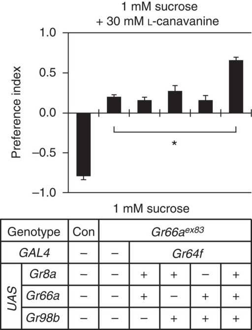 Attraction to L-canavanine induced by ectopic expression of Grs in sugar-sensing GRNs.Two-way choice assays testing for attraction or aversion to L-canavanine in flies misexpressing Gr8a, Gr66a and Gr98b in sweet-sensing GRNs. The Grs were ectopically expressed in a Gr66aex83 mutant background. n=5 for each genotype. Data are mean±s.e.m. *P<0.05 (analysis of variance with post hoc Tukey test).