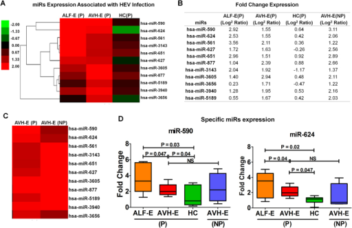 (A) Distinct miR expression in pregnant HEV infection compared to HC. (B) Difference in fold change (log2 ratio) expression of various miRs in three groups. (C) No difference in miR profiling in AVH-E(P) and AVH-E(NP) (D) Fold change expression of miR-590 and miR-624 of various subjects. Data are expressed as box plots in which the horizontal lines indicate the 25th, 50th, and 75th percentiles of the fold change measured by qRT-PCR.