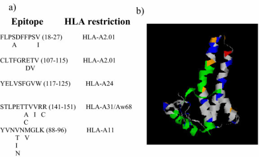 Variation within CD8 T cell epitopes of HBVc. Five of the best defined class I T cell epitopes from HBVc (for references see text) are shown together with alternative amino acids found at each position. The position of the epitopes (green) within the HBVc three dimensional structure is shown in the right hand panel. The rest of the colour coding is as shown in fig 6.