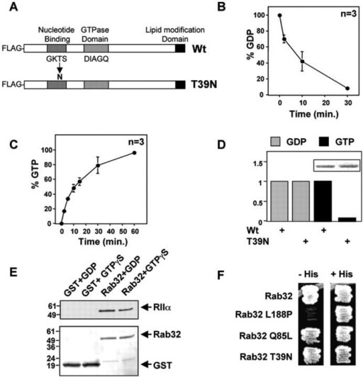 Nucleotide binding properties and gtpase activity of ra open i nucleotide binding properties and gtpase activity of rab32 bacterially purified gst fusion proteins were assayed ccuart Images