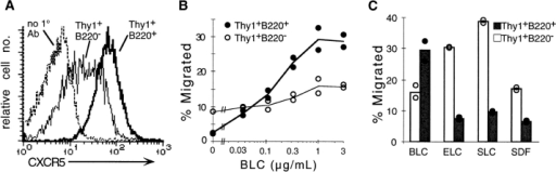 CXCR5 expression and chemotactic response profile of DN T cells from MRL-lpr mice. (A) CXCR5 expression on DN (Thy1+B220+) and conventional (Thy1+B220−) T cells. DN T cells stained with the secondary antibody alone (no 1° Ab) are shown as a control. (B and C) Chemotaxis of a 3:1 mixture of MRL-lpr and B6 splenocytes in response to (B) BLC and (C) a panel of lymphoid chemokines. Results are expressed as percentage of input cells transmigrated for DN T cells (•) and conventional T cells (○). Chemokine concentrations in C: BLC, ELC, and SLC, 1 μg/ml; SDF1, 0.3 μg/ml. MRL-lpr mice were old 5 mo at the time of analysis. Lines (B) and bars (C) represent means of duplicate transwells. Results in A are representative of three, and in B and C of two independent experiments.