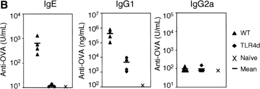 TLR4 signaling is required for Th2 sensitization to inhaled OVA. (A) BAL inflammatory cells of WT or TLR4d mice sensitized intranasally with OVA with low dose LPS (0.1 μg), or WT primed with LPS alone, or PBS on day 21. Total bar height represents total cell number in BAL and error bars are based on total cell numbers. *, P < 0.04 (total BAL cell number from TLR4d vs. WT). One representative experiment of six is shown. (B) Serum antibody responses by ELISA on day 21 in WT (▴) and TLR4d (♦) mice compared with pooled naive serum (×). P < 0.05 (WT vs. TRL4d) for IgG1 and IgE responses.