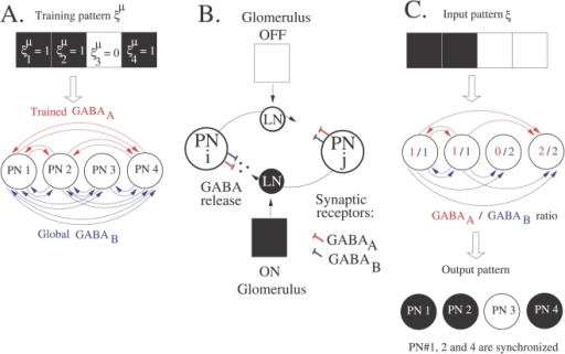 Storage and recall in inhibitory sub-circuits.(A) Trained GABAA connectivity. The spiking associative memory consists of oscillatory PNs (one PN per input component) coupled with GABAA and GABAB synapses. Following clipped Hebbian learning (Equation 7), GABAA connections are created between the first, second and fourth PNs (neurons associated to active bits in the training pattern ξμ). For simplicity, we consider that the GABAB network is global. (B) Hypothetical input-dependent gating of lateral inhibition in the AL. Two PNs (PN i and j) are represented as large circles. Lateral inhibition between PNs is gated by inhibitory LNs (small circles) receiving glomerular input. In the presence of an odor, the active glomerulus (black square) turns on the LN (black circle) associated to the connection j → i. The LN releases GABA that binds to GABAA and GABAB receptors onto the postsynaptic cell (PN i). On the contrary, the inactive glomerulus (white square) turns off the LN (white circle) thereby keeping silent the connection i → j. (C) Input-dependent gating of lateral inhibition in the spiking associative memory. The input pattern ξ (noisy version of the training pattern) activates a specific inhibitory circuit in the GABAergic network depicted in (A). The first and second PNs are associated to active bits in the input pattern ξ and their outgoing connections are thus activated. On the contrary, the third PN is associated to an inactive bit in the input pattern and its outgoing connections are turned off. PNs synchronize according to the balance between their GABAA and GABAB inputs (GABAA/GABAB ratio). Here, the first, second and fourth PNs synchronize (GABAA/GABAB≥1) whereas the third PN desynchronizes (GABAA/GABAB<1) and the training pattern is retrieved (synchronized PNs are black).