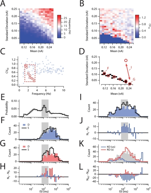 "Effects of stochastic channel gating alter the response to stellate                            cells to naturalistic stimuli.(A,B) Plot of mean spike frequency (A) and coefficient of variation of                            the ISI distribution (B) as a function of the mean and standard                            deviation of band limited white noise inputs obtained from 5 s duration                            simulations (N = 384). (C) CV plotted                            as a function of mean firing frequency for the same data shown in A and                            B. The frequency and CV of several recordings (see [49]) from                            neurons in the superifical layers of the medial entorhinal cortex                                in vivo are plotted for comparison (red dots).                            These values from in vivo data were used to define a                            region of stimulus space selected for further analysis (red box). (D) A                            masked plot of stimulus space shows the simulations that resulted in                            values within the red box defined in C. Longer simulations (150 s) were                            run for the points indicated in red using both the deterministic and                            stochastic models. (E) The mean ISI probability density for experimental                            recordings plotted in C. Gray shaded region indictates the range of ISIs                            for spike clusters (see text). (F, G) ISI histograms obtained                            from simulations with the deterministic (""D"") and                            stochastic (""S"") versions of the model using input                            statistics at the extrema of the plot in D (indicated by                            ""F"" and ""G""). (H) The difference                            in spike counts between the D and S simulations for the data plotted in                            F (blue) and G (red). The stochastic model shows a selective                            redistribution in the probability of spiking that produces an increase                            in the clustering interval (shaded region) and a decrease at longer ISI                            intervals. (I) ISI histograms obtained from simulations with                            deterministic (blue) and stochastic (black) versions of the model using                            input statistics that fluctuate randomly between the two states                            indicated by the double-headed arrow in D. (J) The difference in spike                            counts between the D and S simulations for the data plotted in I. (K)                            ISI histogram for response of the knockout model to the unscaled                            (""us""; blue) and the scaled                            (""s""; red) poisson stimuli (see text). Gray shaded region is the data from I replotted. (L) The                            difference in count between the ""us"" and                            ""s"" simulations for the data plotted in K. All                            histograms use exponentially spaced bins."