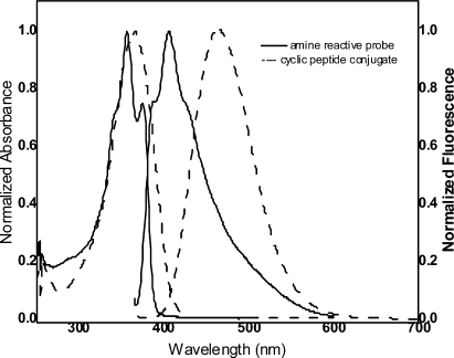 Normalized UV−visible absorbance and fluorescence emission spectra of the amine-reactive probe 1 (—) and cyclic peptide conjugate 7 (---) in DMSO λmaxabs = 355 nm, λmaxem = 460 nm, Qy = 0.92.