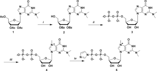 Synthesis of the m3G 5′-pyrophosphateimidazolide. Reagents and conditions: (i) a: Py/NH3aq sat., 3 h, r.t.,; b: MMTrCl, Py/DMF, 24 h, r.t.; c: BzCl, Py, r.t., 24 h, D 80% AcOH, r.t., 5 h; (ii) a: salicyl chlorophosphite, r.t., 15 min; b: tri-n-buthylammine pyrophosphate, DMF, r.t, 20 min; c: I2, Py/H2O, r.t, 15 min; d: ethylenediamine, r.t., E NH3aq sat., 0°C 48 h; (iii) MeI, DMF, 40°C, 5 h; (iv) imidazole, triphenylphosphine, di-2-pyridyldisulphide, DMF 24 h. Py, pyridine; MMTrCl, monometoxy trityl chloride; DMF, dimethylformamide; r.t. = room temperature; BzCl, benzoyl chloride; AcOH, acetic acid; MeI, methyl iodide.