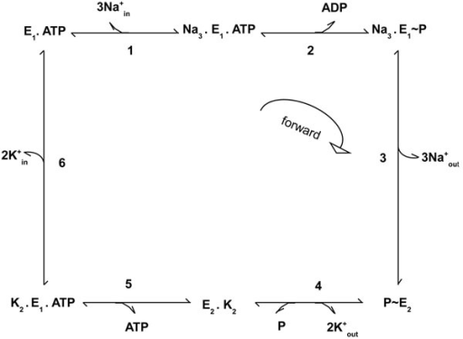 Reaction Scheme For Sodium Potassium Pump Reaction Sch Open I