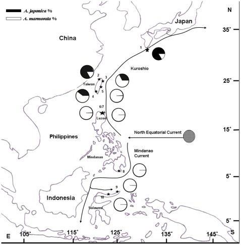 Map showing the relative abundances of A. japonica and A. marmorata in East Asia.The sampling locations of the glass eels are indicated by asterisks. No. 1: Yakushima Is., n = 2050 (Yamamoto et al., 2001); No. 2: Danshui R., n = 2547; No. 3: Yilan R., n = 3279; No. 4: Tungkang R., n = 673; No. 5: Siouguluan R., n = 7170; No. 6: Cagayan R., n = 1974 (Tabeta et al., 1976); No. 7: Cagayan area., n = 2075; No. 8: Buayan R., n = 552; No. 9: Manado, n = 350; No. 10: Poigar R., n = 4997 (Arai et al., 1999).