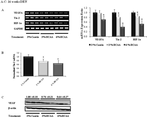 Effects of BCAA supplementation on angiogenesis in rats after 16 weeks of DEN administration.The relative band intensities of the angiogenesis markers are shown in the right-hand panels (A). The expression level of Tie-2 mRNA was determined by RT-PCR (B). VEGF protein expression was determined by Western blotting (C). The expression level of each gene is normalized to those of GAPDH (A and B) and β-actin (C). The lanes contain mRNA (A) and protein (C) samples from three rats per group. Values shown are means ± standard deviation. *P<0.05.