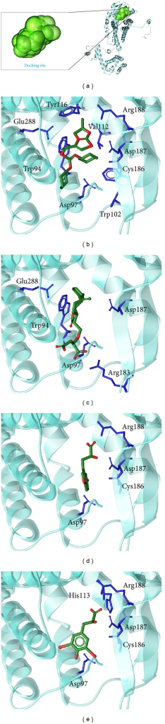 The docking poses of ligands. (a) The crystal structure of CXCR4 and the docking site, (b) IT1t, (c) Saussureamine C, (d) 5-hydroxy-L-tryptophan, and (e) diiodotyrosine.
