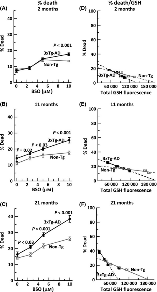 Neurodegeneration due to glutathione depletion increases gradually with age, more so in 3xTg-AD neurons. Glutathione depletion with indicated BSO stress in A) 2-month neurons, (ANOVA genotype F(1,139) = 4.4, P = 0.04, BSO F(3,139) = 57, P < 0.001), B) 11-month neurons (ANOVA genotype F(1,142) = 26, P < 0.001, BSO F(3,142) = 18, P < 0.001), and C) 21-month neurons (ANOVA genotype F(1,143) = 22, P < 0.001, BSO F(3,143) = 51, P < 0.001). n = 250–300 neurons from 3–4 mice per age per genotype. Neuron death with GSH depletion and extrapolation to zero GSH levels in neurons from D) 2-month non-Tg mice slope = −0.0001 (R2 = 0.83); 3xTg-AD slope = −0.0002 (R2 = 0.97), E) 11-month non-Tg slope = −0.00005 (R2 = 0.87), 3xTg-AD slope = −0.0001 (R2 = 0.99) and F) 21-month non-Tg slope = −0.0001 (R2 = 0.94), 3xTg-AD slope = −0.0003 (R2 = 0.85). n = 3–4 animals per age per genotype.